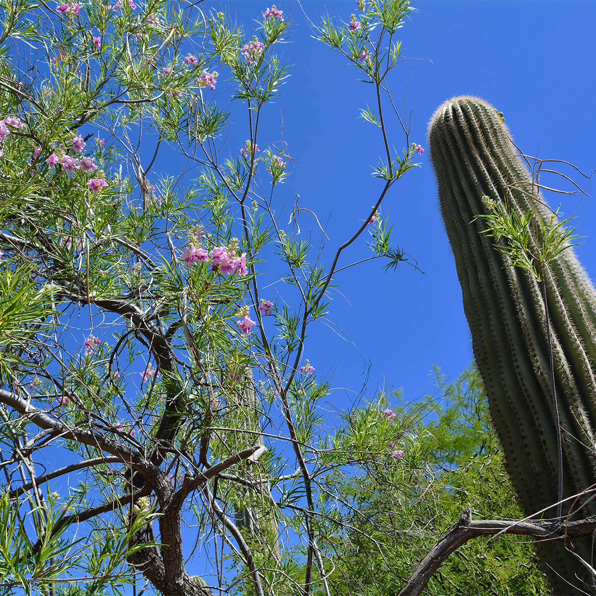 flowering tree and cactus
